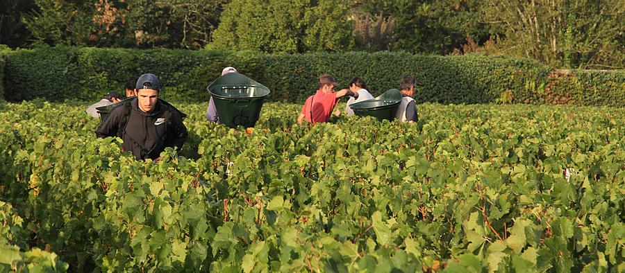 The Bordeaux Grand Cru Harvest Tour October 2017
